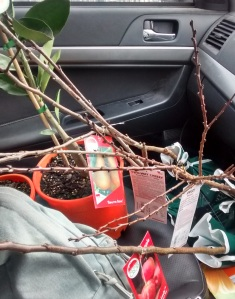Trees on the passenger seat of my car.